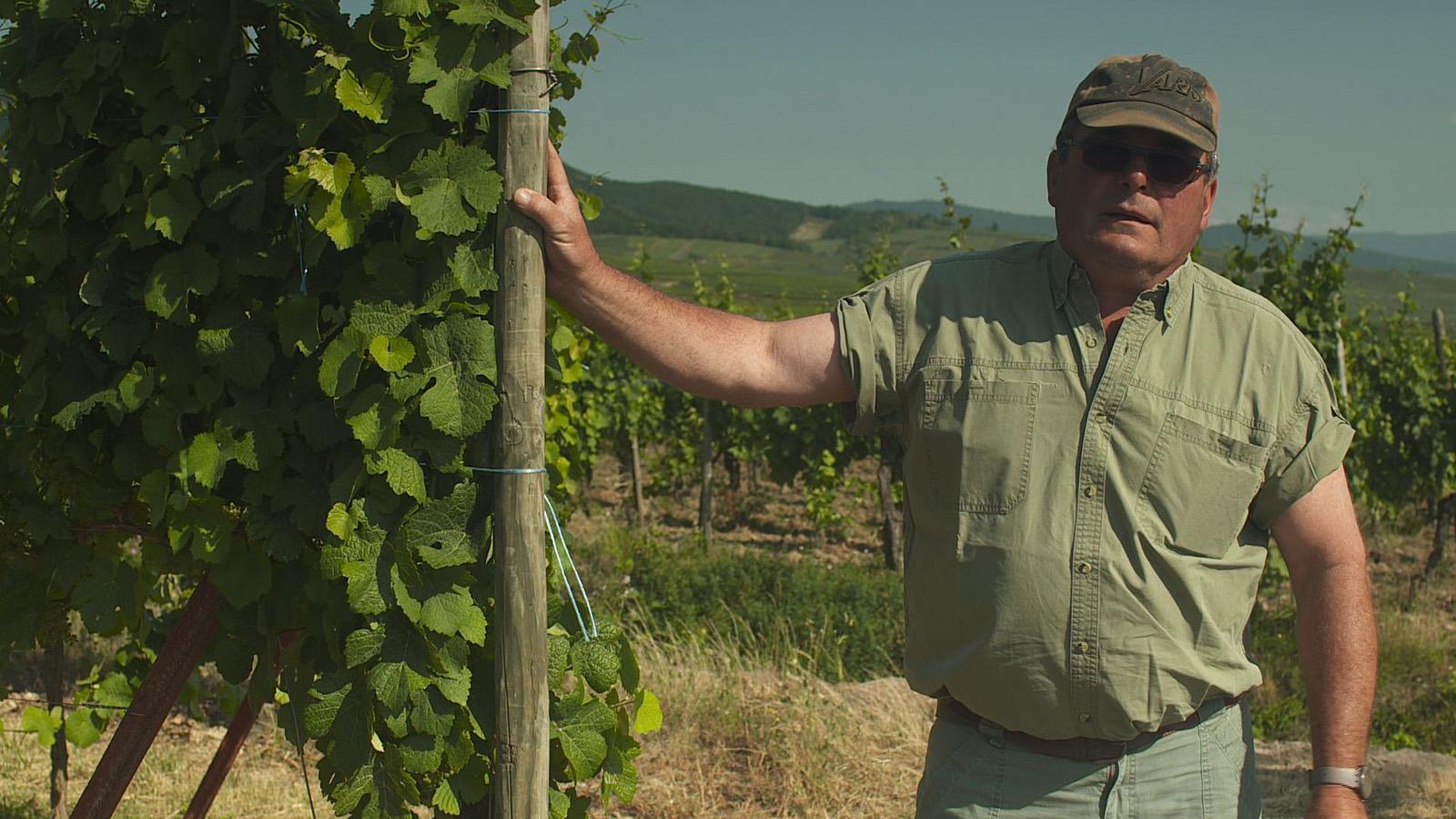 Luc dans les vignes du domaines Schneider