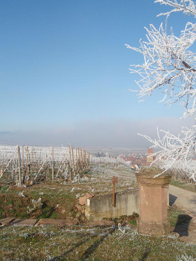 Vue sur le clocher d'Eguisheim depuis le vignoble