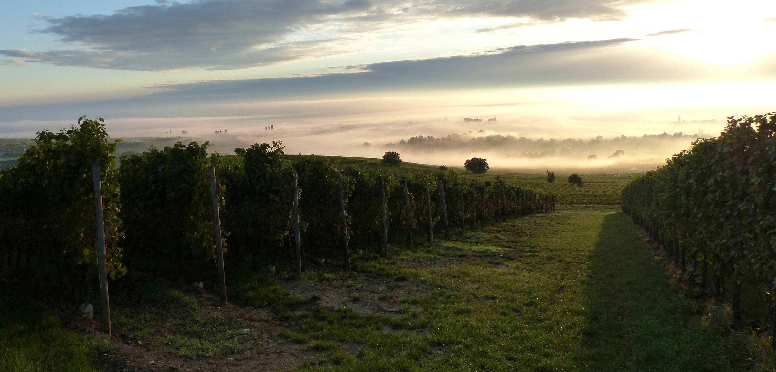 Alsace Eguisheim vins Schneider